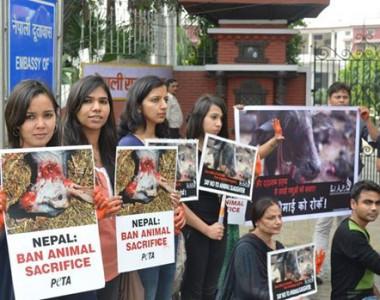 Nepal'deki Hayvan Katliamı festivali bundan sonra yapılmayacak!!!