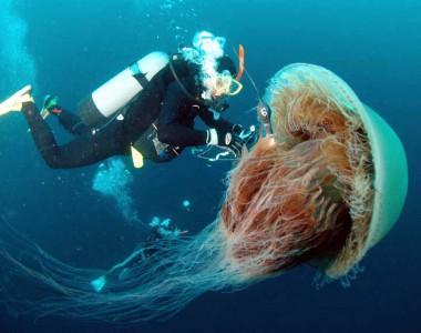 Beyinsiz : Deniz Anası