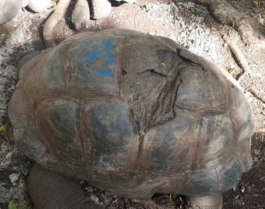 Yaş 192 : Prison Island'ın en yaşlı kaplumbağası